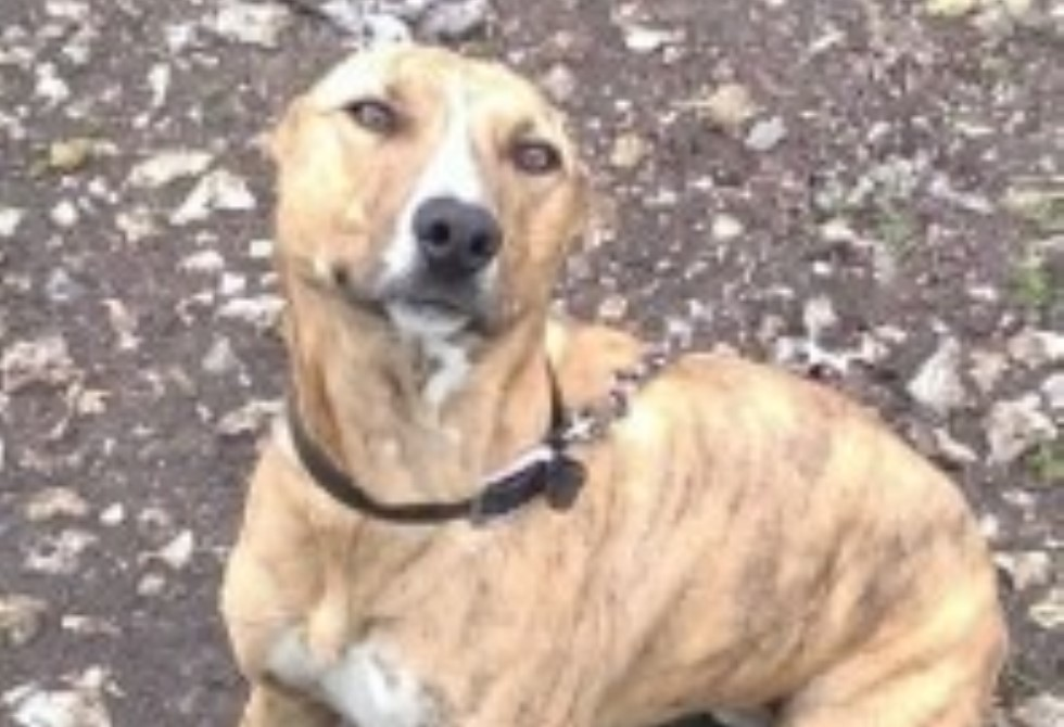 Hampshire Police – Forest The Dog Featured