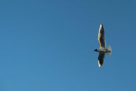 Bird in Flight - Haiku picture