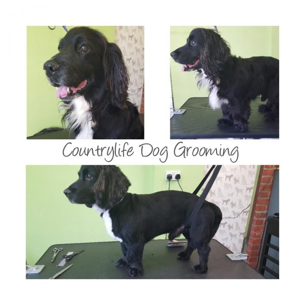 Countrylife Dog Grooming