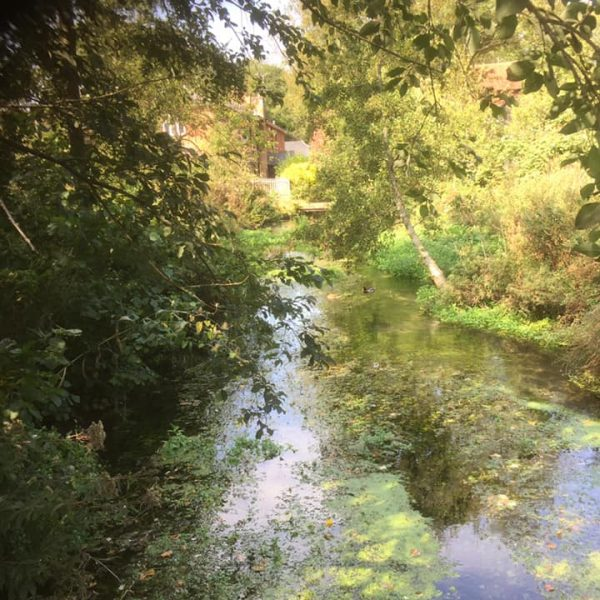 The Wonders of Rooksbury Mill Local Nature Reserve