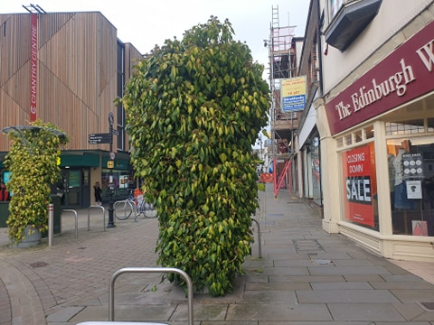Andover Triffids