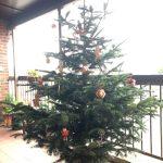 Kingfisher Tree Rob Gilbert
