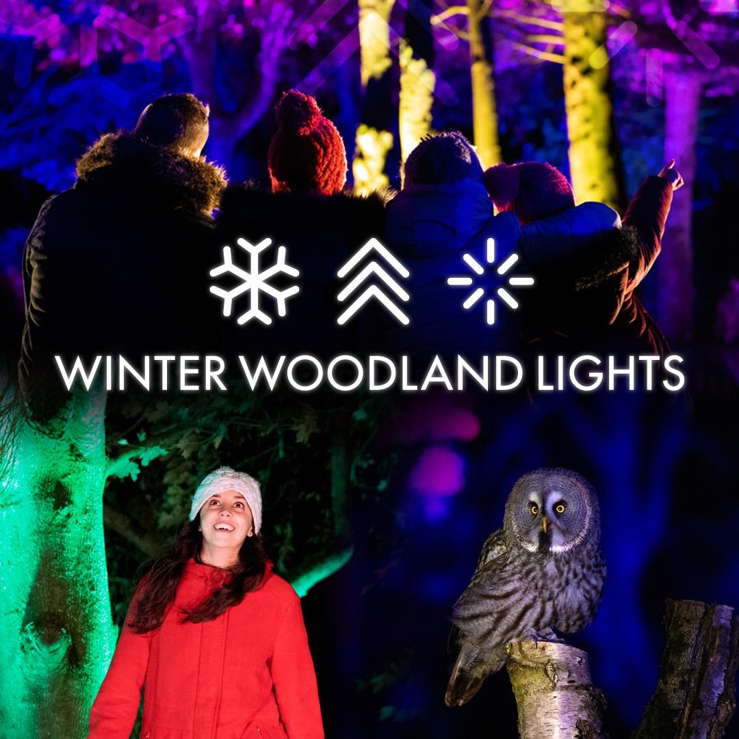 Winter Woodland Lights – 1080×1080 (no dates)