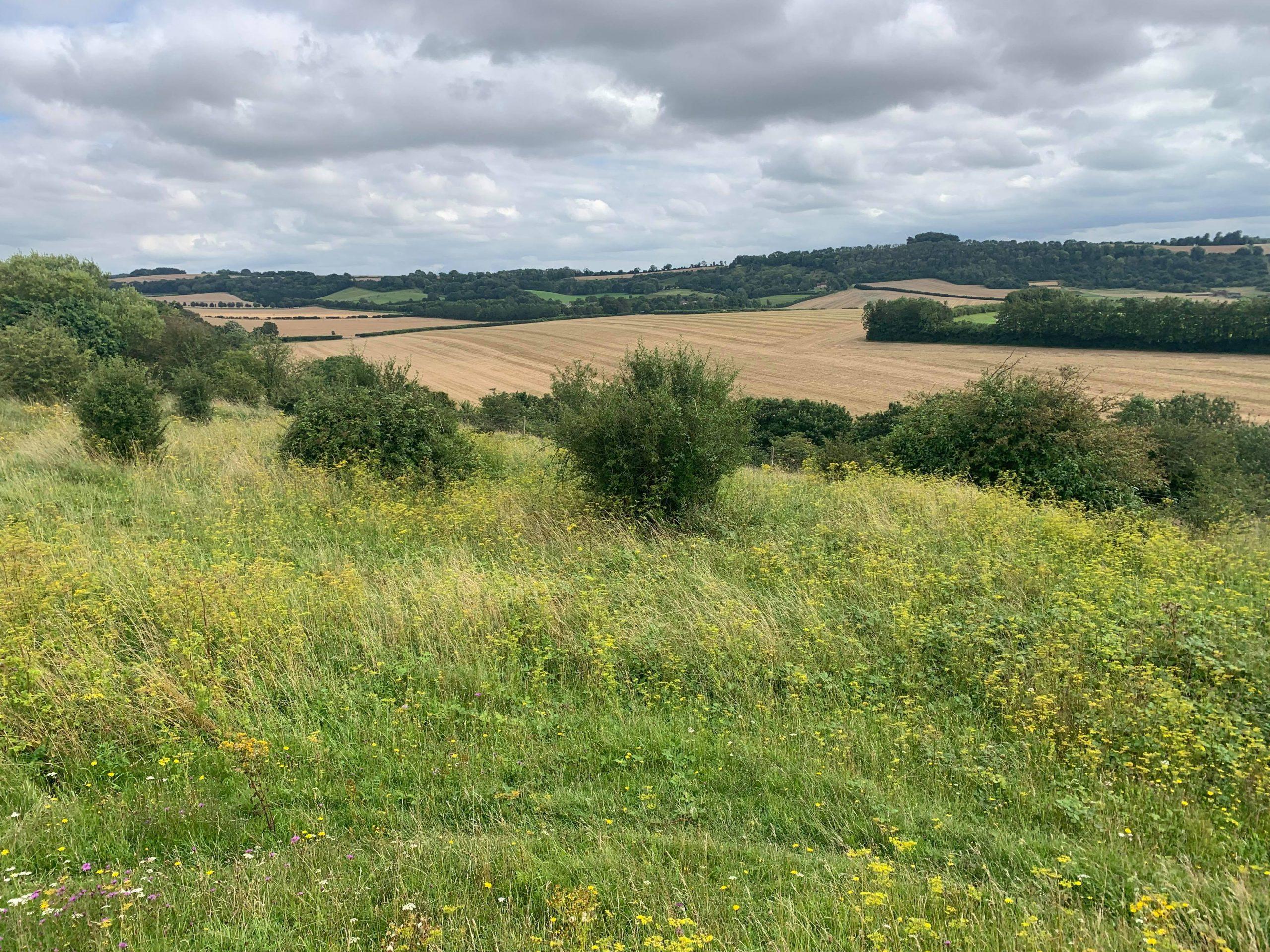 Magdalen Hill 18.8.21.Winchester.3